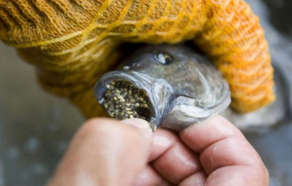 STOP-EATING-THIS-FISH-ASAP-READ-ABOUT-THE-DISGUSTING-REASONS-WHY