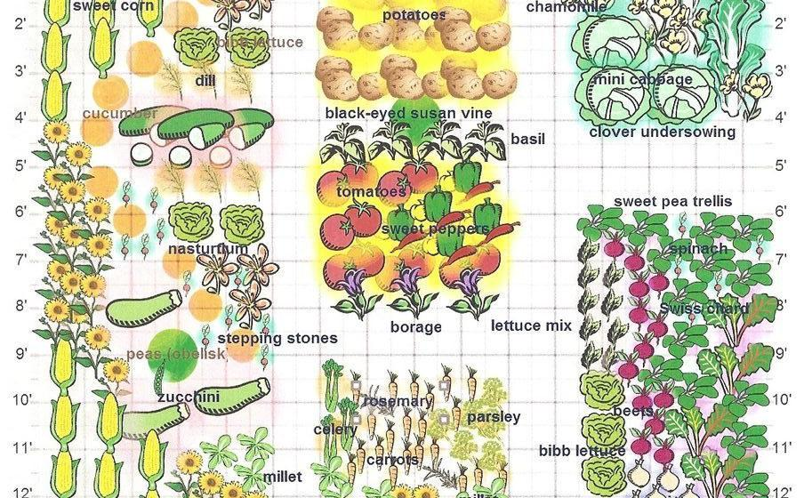 Tomatoes Hate Cucumbers: Secrets of Companion Planting and Popular Planting Combinations